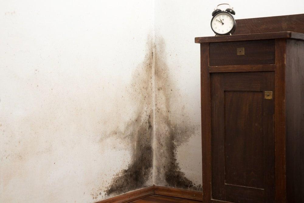 black mold in houston
