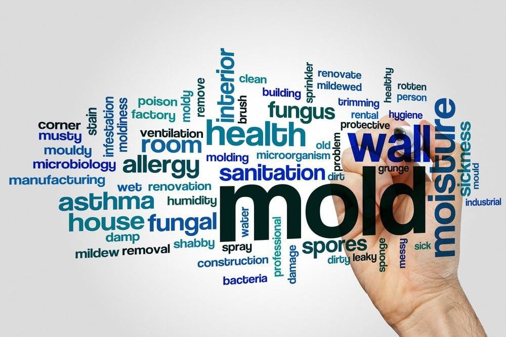 mold allergy.jpg